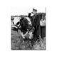 affiche fernandel avec une vache